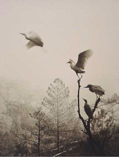 Don Hong-Oai. Birds in Flight