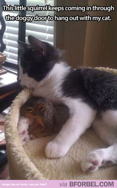 Unlikely animal friendships