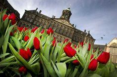 Nog geen plannen voor de #voorjaarsvakantie? Het Paleis is open! Volg de #audiotour #kindertour #rondleidingen