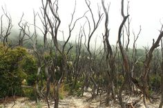 Located in Mount Papandayan, Indonesia. This is the renowned dead forest at the peak of the mountain.