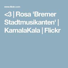 <3 | Rosa 'Bremer Stadtmusikanten' | KamalaKala | Flickr