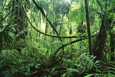 jungle - Google Search