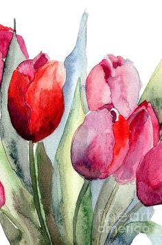 Tulips Flowers by Regina Jershova - Tulpen Dekoration Watercolor Pictures, Watercolor Cards, Watercolor Flowers, Watercolor Paintings, Watercolors, Painting Flowers, Flower Paintings, Watercolor Water, Drawing Flowers