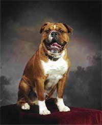Image result for leavitt bulldog