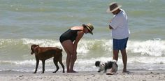 "Brohard Paw Beach on Harbor Drive S. Venice, FL – Two doggie play yards offering drinking fountains, showers for ""dogs only"", fire hydrants and leash posts provide gated access to the beach. Picnic tables, water fountains and waste disposal bags are available to humans. bropaw-ss-a"
