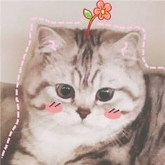 Cute Cats And Kittens, I Love Cats, Crazy Cats, Cool Cats, Kittens Cutest, Cute Cat Memes, Funny Cats, Pets 3, Cat Dog