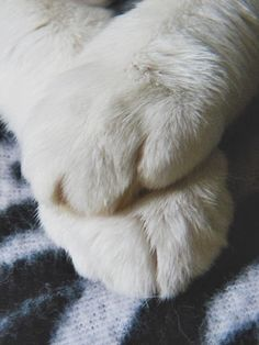Cats leave pawprints on our hearts. ❤️