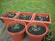potted or container vegetable Gardening Tips for beginners
