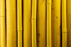 bamboo - photo/picture definition at Photo Dictionary - bamboo word and phrase defined by its image in jpg/jpeg Photo Dictionary, Bamboo Species, Golden Bamboo, Natural Building, Island Design, Image Types, Building Materials, Earth Tones, Image Search