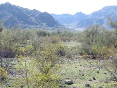 North Mountain Preserve, Phoenix. Photo by Marilyn Dryden.