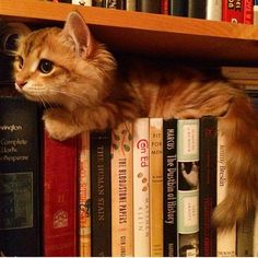 Cats and books. What else do you need?