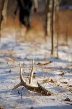 """Shed Hunting Tips 