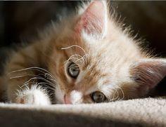 Kočky a koťata - Koleksiyonlar - Google+