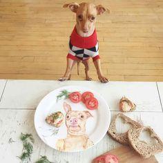 """Tuna looking over a """"Tuna Melt"""" sandwich! Love the plate! I love Tuna!"""