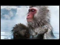 David Attenborough - Wonderful World