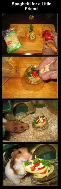 Hamster having spaghetti dinner!