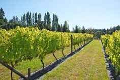 premium oregon vineyard winery and custom home yamhill carlton oregon pinterest