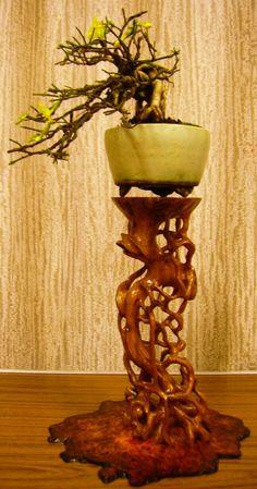 Kết quả hình ảnh cho tall bonsai stand