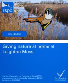 £4 GBP - Rspb Pin Badge | Bearded Tit | Leighton Moss Reserve [01271] #ebay #Collectibles Royal Society, Pin Badges, Fundraising, Wales, Charity, Scotland, England, Jewellery, Nature