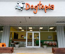 Starting a dog daycare business is very easy now with Dogtopia. Visit us and know how to start a dog daycare business and dog day care franchise. Franchises are available to purchase so Call us now to get more information