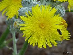 Abeja acercándose a una flor