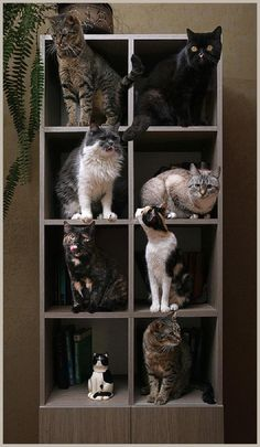 How to properly stack and store your cats