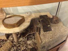 Hamster Home Aquarium