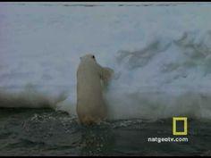 arctic animals video (natgeo)