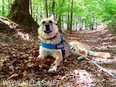 Wie wünschen einen entspannten #Muttertag.  #Schäferhund #Iserlohn #Stadtwald #Hund #Sauerland