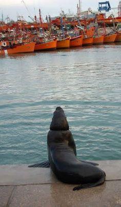 Puerto de Mar del Plata, prov. de Buenos Aires ... y uno de sus habitantes ...