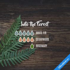 Into the Forest - Essential Oil Diffuser Blend