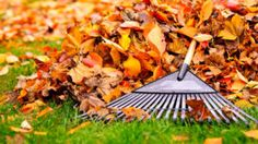 A Seasonal Guide: Fall Lawn and Landscape Care Fall Lawn Care, Lawn Care Tips, Organic Gardening, Gardening Tips, Faire Son Compost, Fall Clean Up, Lawn And Landscape, Autumn Garden, Lawn And Garden