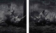 Cragie Horsfield, Tweeluik Zoo (detail), 1990, 2008