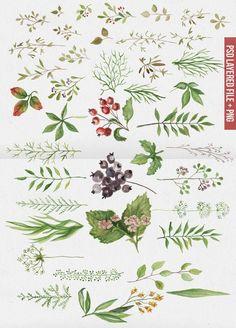 Watercolor leaves set by BON-design on Creative Market Watercolor Leaves, Floral Watercolor, Kids Graphics, Floral Drawing, Botanical Art, Printable Art, Printables, Nursery Art, Vintage Prints