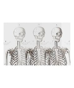 Another great find on #zulily! Skeleton Paper Place Mats - Set of 24 #zulilyfinds