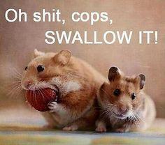 oh-shit-its-the-cops-swallow-it.jpg 620×547 pixels
