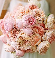 cabbage roses from Martha Stewart