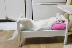 Draw me like one of your french cats
