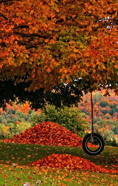 Autumn tree, heaps of orange leaves, and a tire swing. Autumn tree, heaps of orange leaves, and a tire swing. Beautiful World, Beautiful Places, Beautiful Pictures, Amazing Photos, Autumn Scenes, Seasons Of The Year, All Nature, Fall Pictures, Autumn Photos