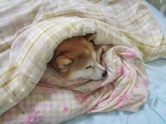 Uploaded by ⋆ ˚。⋆˚ ʷᵃᶜʰⁱᵉ ˚⋆。˚ ⋆. Find images and videos about cute, kawaii and dog on We Heart It - the app to get lost in what you love. Kawaii, Shiba Inu, Animal Crossing, Cuddling, Fur Babies, Cute Dogs, Your Dog, Corgi, Cute Animals