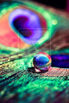 Rainbow Pearl by dansch