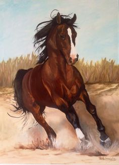 arabian horse photos and fun facts All The Pretty Horses, Beautiful Horses, Animals Beautiful, Beautiful Creatures, Beautiful Things, Beautiful Pictures, Horse Photos, Horse Pictures, Wall Pictures