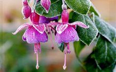Weekend frost threatens fragile plants