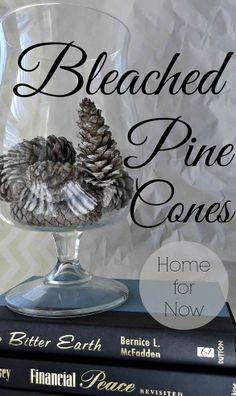 Pine cone Decor...