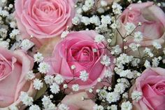 Wedding flowers, pink roses and white gypsophilia