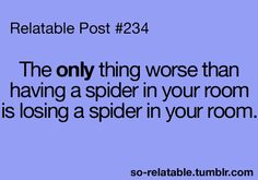 I don't even mind spiders, but if I know there's one in my room...I NEED to find it.