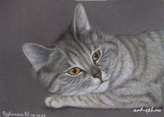 Chats  en peintures  serie A   ( J.D)