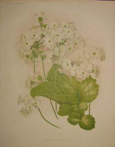 white flowers  no. - 14