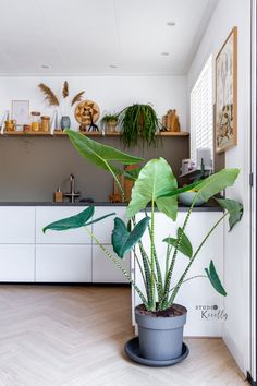 Home Projects, Plant Leaves, Interior, Plants, Blog, Photos, Photography Ideas, Pictures, Indoor