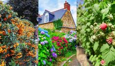 40 Fast Growing Shrubs and Bushes For Creating Privacy Fast Growing Shrubs, Fast Growing Evergreens, Growing Plants, Privacy Trees Fast Growing, Shrubs For Privacy, Privacy Landscaping, Backyard Privacy, Landscaping Ideas, Backyard Plants